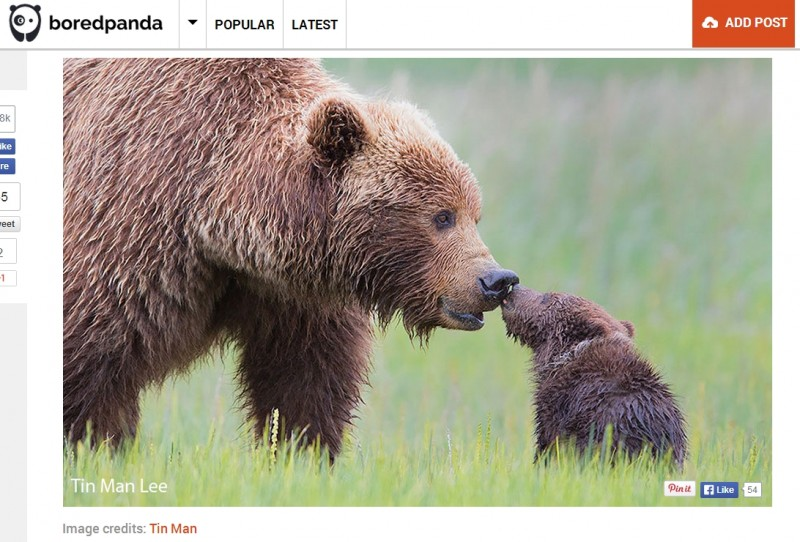 Screenshot: BoredPanda.com